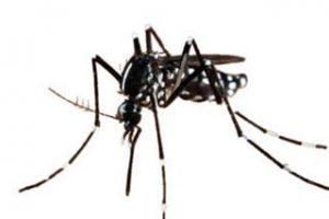 EPOCHALと蚊
